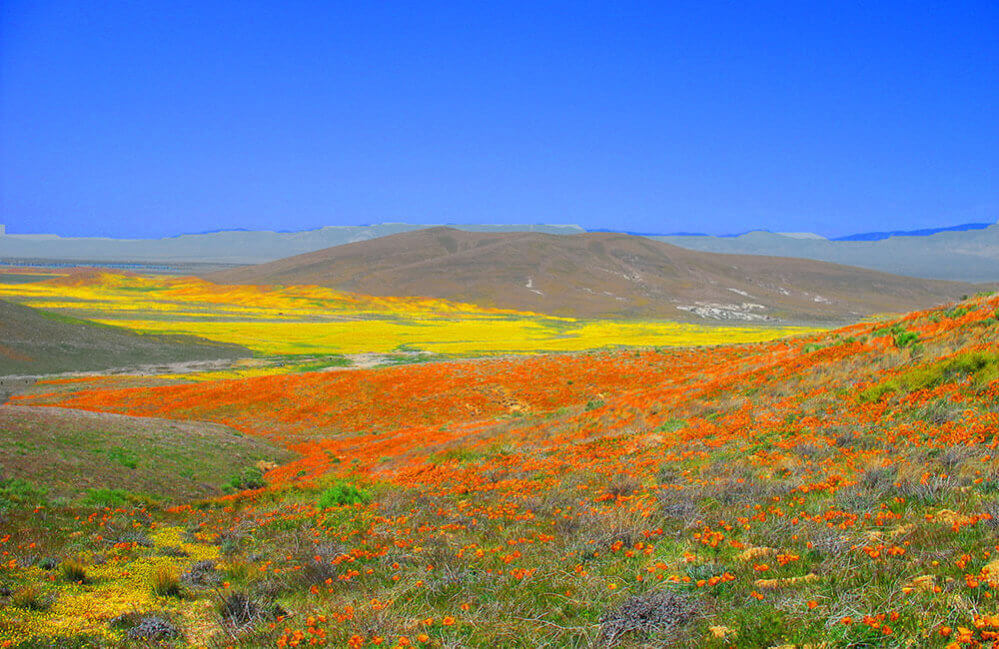 Antelope Valley Poppy Preserve-Interstate 5: SupposeUDrive